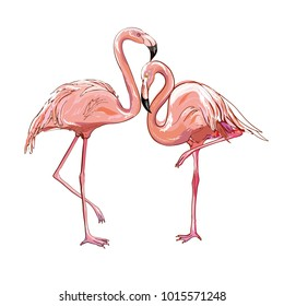 Flamingo isolated on background. Pink flamingo standing on one leg. African exotic bird.