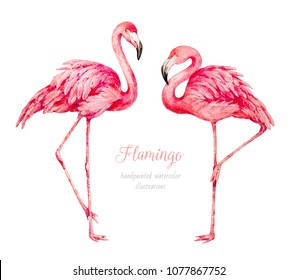 Flamingo. Watercolor illustration