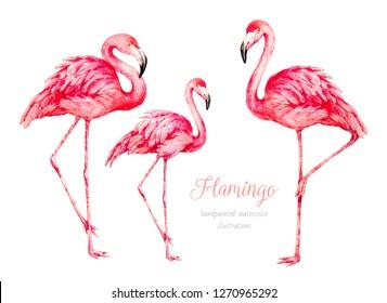 Flamingo. Watercolor illustration