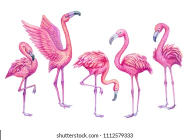 Flamingo watercolor tropical set. Exotic paradise birds, hand drawn illustration.