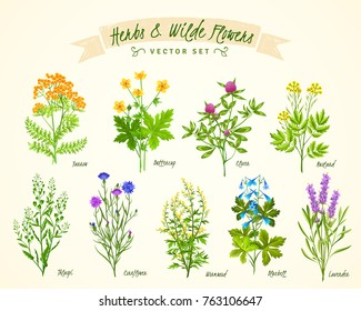 Vector Vintage Set Wild Flowers Medicinal Stock Vector Royalty Free