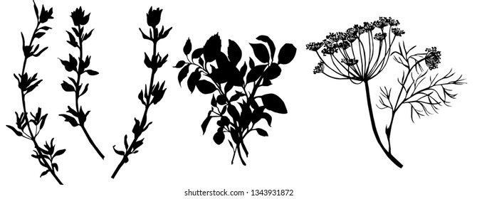 Flavouring herbs. Black and white illustration