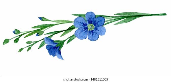 flax flowers. Isolated on white background. watercolor drawing