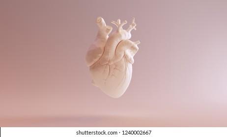 Flesh Colored Anatomical Heart 3d illustration 3d render