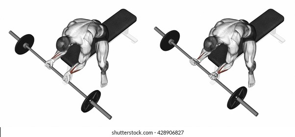 Flexion of the wrist with a barbell undergrip. 3D illustration