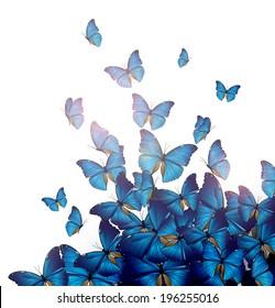 Flight of blue butterflies