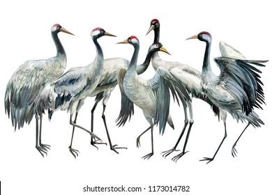 flock beautiful birds birds crane on isolated white background, watercolor illustration