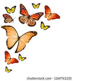 Flock of  butterflies on white