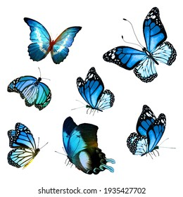 Flock of  butterflies on white background