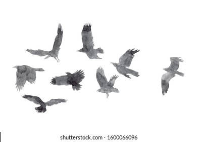 Flock of crows and ravens birds silhouette watercolor hand painted illustration. White isolated background