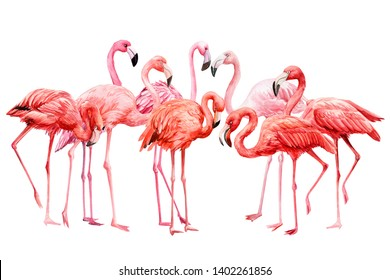 A flock of pink flamingos on a white background, watercolor illustration, tropical birds
