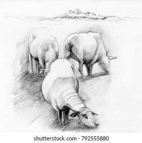 Flock Of Sheep Grazing at Mountains Background