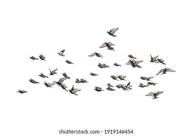 Flocking Birds 3D illustration on white background