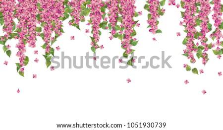 floral background pink hanging flowers leaves stock illustration