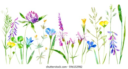 Floral border of a wild flowers and herbs on a white background.Buttercup, clover,bluebell,vetch,timothy grass,lobelia,spike. Watercolor hand drawn illustration