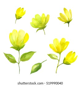 Floral design set watercolor. Spring flowers watercolor isolated on white background. Hand drawn watercolor spring background