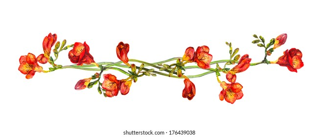 Floral divider separator wit red flowers freesias