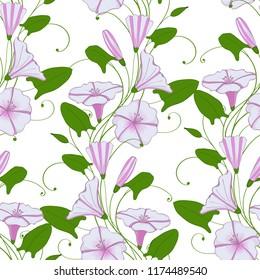 floral elegant background convolvulus. seamless tender pattern flower bindweed. Morning-glory endless feminine ornament.