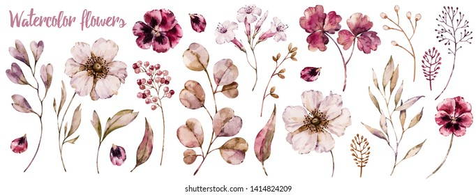 Floral elements collection, watercolor flower set. Botanical template isolated on white, handpainted aquarelle wildflower compilation