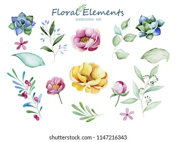 floral elements in watercolor. Succulents, pink and yellow flowers, a branch with berries and blue flowers