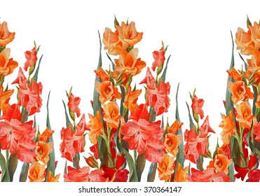 Floral Horizontal Seamless BorderGladiolus Isolated On A White Background Watercolor Painting