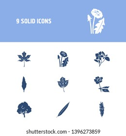 Floral icon set and dandelion with willow, buttercup and poplar tree. Hornbeam related floral icon  for web UI logo design.
