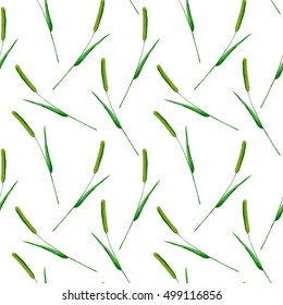 Floral seamless pattern with Phleum pratense.Timothy grass branches.image for fabric, paper and other printing and web projects.Watercolor hand drawn illustration.White background.