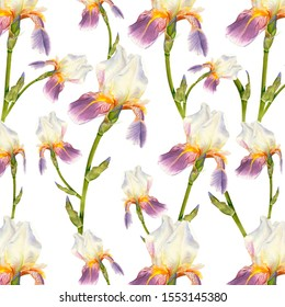 Floral seamless pattern with purple iris isolated on white background. Watercolor painting, botanical illustration