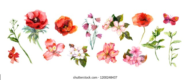 Floral set of red and pink flowers, grass (poppies, cherry blossom, others). Spring, summer natural watercolor collection