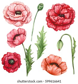 Poppy leaf images stock photos vectors shutterstock floral set of watercolor red and pink poppies buds and green leaves mightylinksfo