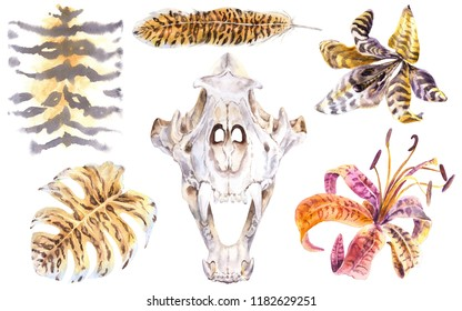 Floral Tiger Skull Watercolor Set. Wild Tiger Print