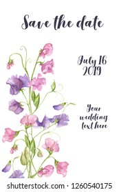 Floral watercolour wedding invitation card. Flower framed card. Save the date card. Sweet pea blossoms on a white background. Tender flowers and floral pattern card.