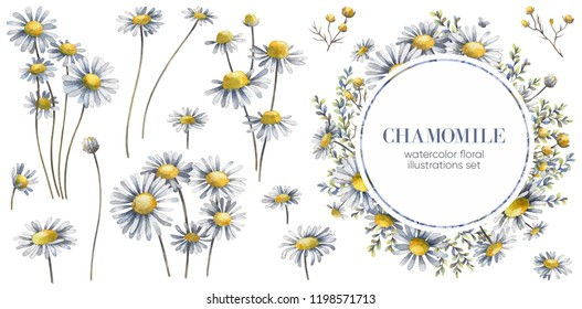 Floral wreath. Chamomile illustration. Watercolor chamomiles.