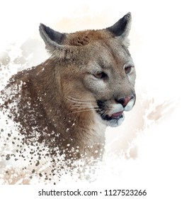 Florida panther or cougar digital painting