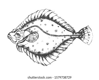 Flounder fish with human eyes. Pencil  drawing.