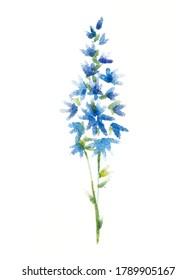 Blumenblauer Delphinium Aquarell, weißer Hintergrund einzeln.