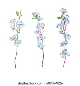 Flower Branch on white watercolor illustration