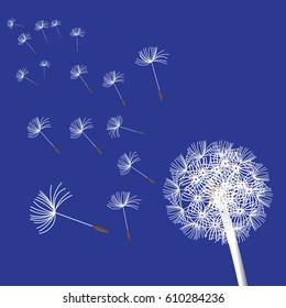 flower dandelion blowing seeds illustration