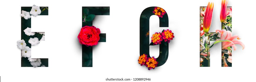 Flower font Alphabet e, f, g, h, made of Real alive flowers with Precious paper cut shape of letter. Collection of brilliant flora font for your unique decoration in spring, summer & many concept idea