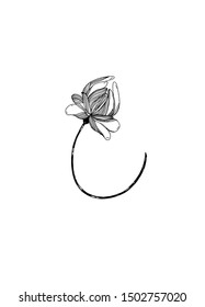 Flower graphic illustration.Black and white flower image.Decorative illustration magic flower on white background.Hand drawn plant.Isolated sketch
