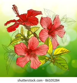 Flower Hibiscus on green background