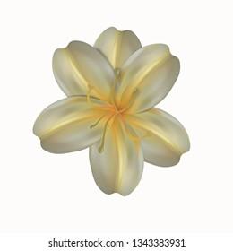 Flower isolated on white background.