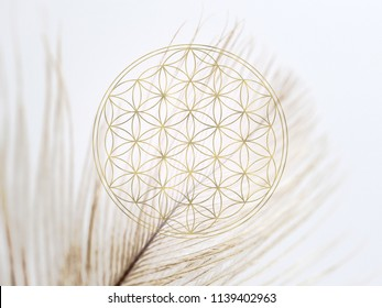 flower of life - energy symbol with soft feather