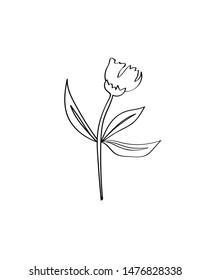 flower line art. Contour drawing. Minimalism art. Sketch. Modern decor. Card print. Wall decor