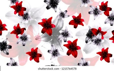 flower red lilium