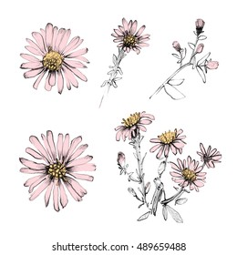 Flower set. Realistic hand drawn flowers isolated on white background. Ink, pencil, watercolor. Botanical art illustration. Vintage design for sketchbook, greeting card, postcard, invitation, fabric.