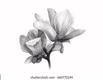 Flower sketch bouquet hand drawing by pencil
