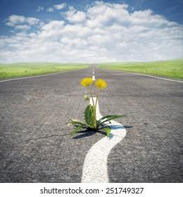 Flower sprouting through asphalt. Concept, save life.