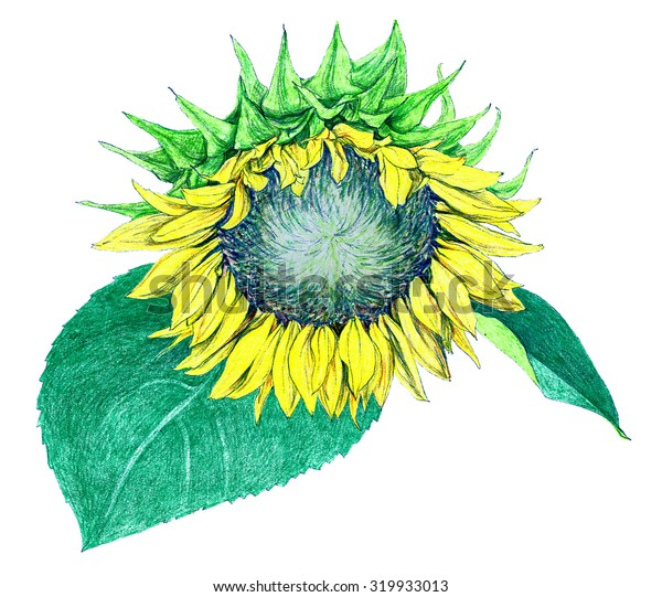 Flower - Sunflower - crayon drawing