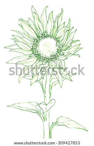 Royalty Free Stock Illustration Of Flower Sunflower Pencil Drawing